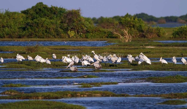 Birds in Jaffna